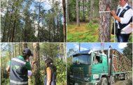 Garantizar el registro y movilización legal de madera, otra prioridad del ICA