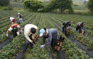 Gobierno lanza línea de crédito por $ 500 mil millones para pequeños productores rurales
