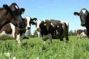 Colombia logró acuerdo para la exportación de material genético bovino a Paraguay