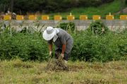 Procuraduría vigilará proceso de construcción de la Política Pública para la Población Campesina