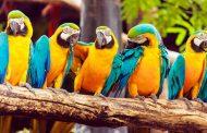 Corpoguajira organiza foro virtual de manejo, gestión y conservación de la fauna silvestre