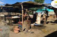 Corpoguajira suspende mataderos clandestinos de cerdos en Maicao