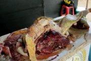 En La Guajira decomisan 57 kilos de carne de tortuga y 40 iguanas