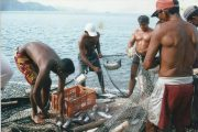 En Semana Santa el consumo de pescado aumenta en promedio 60 %