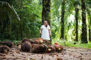 Al Cesar, regresó una mujer palmera, luego de ser víctima de la violencia