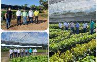 El ICA inspeccionó viveros de material vegetal de propagación del Cesar
