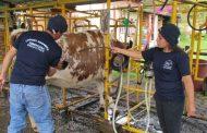 Personal que maneje animales de producción debe capacitarse en bienestar animal