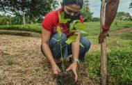 Corpoguajira durante el mes de octubre 60.000 árboles plantarán