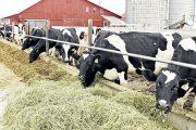 Minagricultura asigna recursos por más de $ 5.200 millones para alimentación bovina
