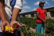 La biodiversidad que nos permite alimentarnos está cada vez más amenazada