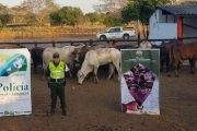Nuevo golpe del CIIIP contra el contrabando agropecuario en zona fronteriza del país