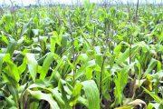 MinAgricultura pone en marcha mesas técnicas regionales de ordenamiento a la producción