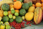 Abren convocatoria para que Asociaciones de pequeños productores de frutas y hortalizas hagan parte del Fondo de Fomento Hortifrutícola