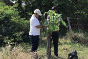 Con jornada de reforestación en el río Guatapurí, Corpocesar conmemoró el Día del Árbol