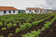 Ampliado plazo para postulaciones del subsidio de vivienda rural