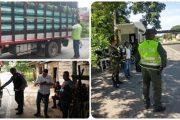 Medidas adicionales del ICA para proteger las plantaciones de plátano y banano
