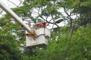 Por podas suspenderán el servicio de energía en La Jagua de Ibirico
