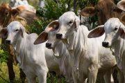 Hacia el Reino de Arabia Saudita salen las primeras 25 toneladas de carne bovina