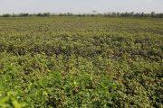 Estas son las medidas para ayudar a productores afectados por altas temperaturas y heladas