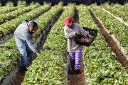 El BanAgrario aclara información con respecto a las deudas de los pequeños productores