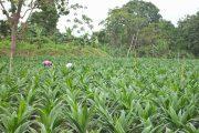 Areandina liderará este viernes mesa de trabajo sobre el futuro del sector agro en el Cesar