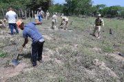 En jornada de reforestación, la UPC plantó 300 árboles en el corregimiento de Guacoche