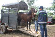 Estos son los requisitos para movilizar equinos en Colombia