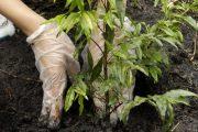 De $ 5 a $ 10 millones recibirán Organizaciones de Acción Comunal que siembren más plantas en sus territorios