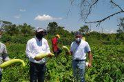 Fortalecimiento al sector agropecuario, apuesta del Alcalde de Bosconia