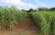 MinAgricultura reactivará 10 jornadas de negocio de Agricultura por Contrato