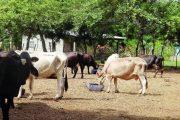 Autoridad sanitaria de Egipto habilitó nueve plantas para la exportación de carne colombiana