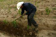 Pequeños productores a inscribirse y aprovechar el apoyo para compra de agroinsumos
