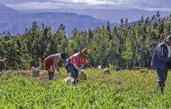 Colombia cuenta con un potencial para sembrar alimentos en 39 millones de hectáreas
