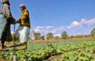 La FAO alienta a una honda transformación para superar la peor hambruna en 30 años