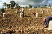 Gobierno apoyará a los productores que tengan empleados con un aporte para el pago de la prima