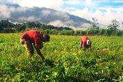 Piden celeridad al trámite del proyecto de ley para beneficio a pequeños y medianos productores del campo
