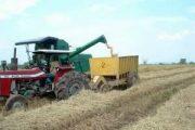 Dos millones de toneladas de arroz en Colombia y no hay quién las compre