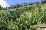 Habrá incentivos de capitalización rural para el sector agropecuario en La Guajira