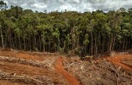 Minagricultura anuncia línea de crédito para financiar proyectos de recuperación en zonas con deforestación