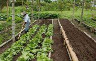 Gobierno y sector productivo del agro unen esfuerzos para impulsar política pública de insumos agropecuarios
