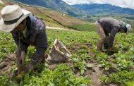 MinAgricultura y Fedegán firman memorando de entendimiento para potenciar la comercialización con Agricultura por Contrato