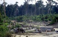 Deforestación ha causado cambios en ecosistemas en Riohacha, Dibulla y San Juan del Cesar