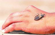 Colombia avanza en atención integral de Chagas