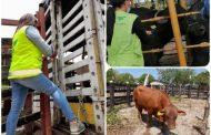 Animales movilizados en el Cesar cumplen con requisitos sanitarios establecidos