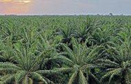 La palma, un cultivo clave que aporta sostenibilidad al país