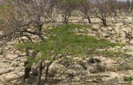 Ampliación de fronteras agrícolas en áreas no permitidas principal causa de deforestación en La Guajira