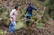 Pago bimestral por la conservación y restauración de la Serranía del Perijá, recibirán 50 familias campesinas