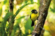 La Guajira, segundo departamento de la Costa Caribe con más avistamientos en el Global Big Day