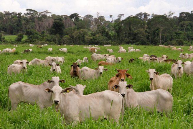 En Valledupar lanzarán programas de ganadería sostenible