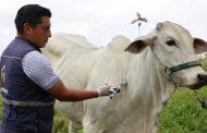 Se aplaza el inicio del ciclo de vacunación contra la fiebre aftosa en el país